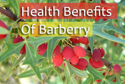 Barberry benefits
