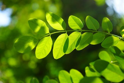 Uses Of Chlorophyll For Humans - Health Inputs